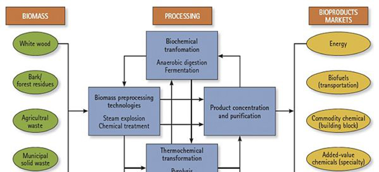 Woody Biomass Properties