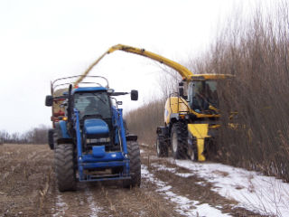 Four year old willow biomass crops being harvested with a New Holland forage harvester fitted with a New Holland coppice header. This system cuts and chips the willow biomass in a single pass.