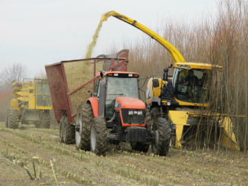 Figure 1. Harvesting willow biomass crops with a single-pass cut-and-chip harvesting system based on a New Holland forage harvester and specially designed cutting head in Upstate New York.